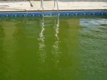 yosun tutmus havuz suyu